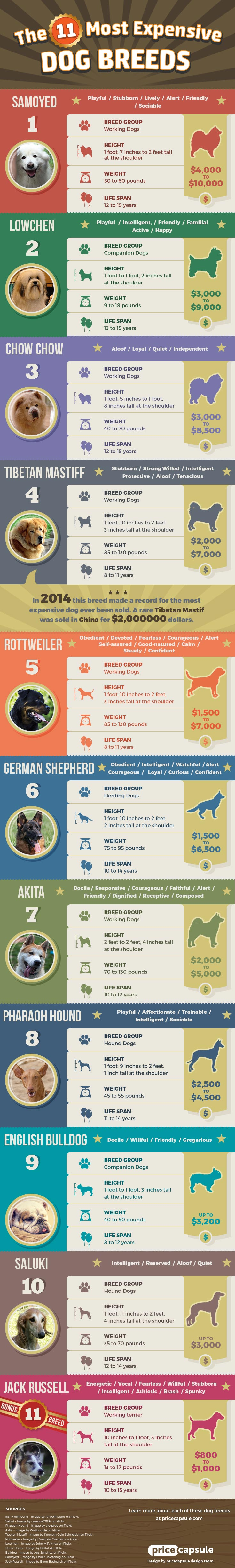 11 Most Expensive Dog Breeds Infographic