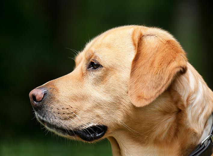 The Cost Of Owning A Dog Pricecapsule